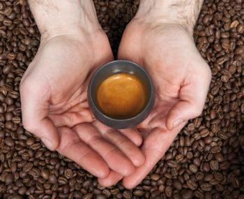 A la découverte du café de spécialité
